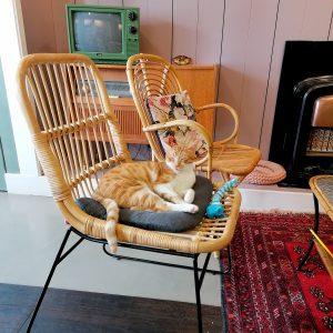 recensie lekker vega restaurant sophies kattencafé leiden